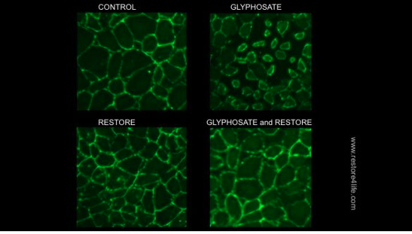 Protect Your Gut from Glyphosate. #guthealth #sponsor #realfood #noGMO